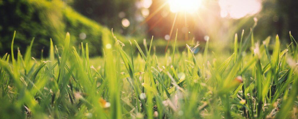 gras met zon