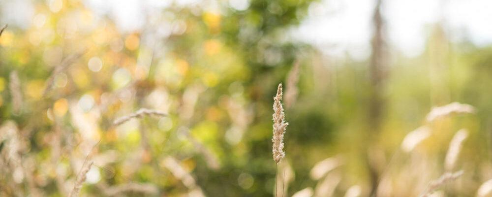 MarleenSahetapyFotografie-AUTUMNFEED-105